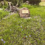 Wild flowers and stumpery