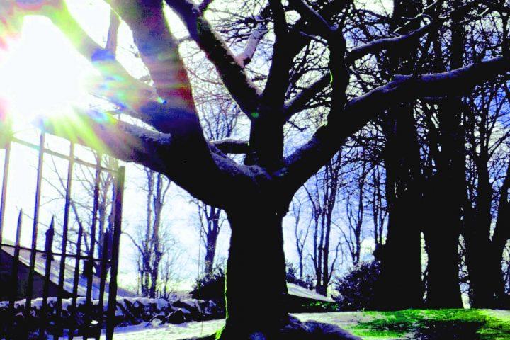 Dalry Winter