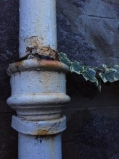 Drainpipe and Ivy