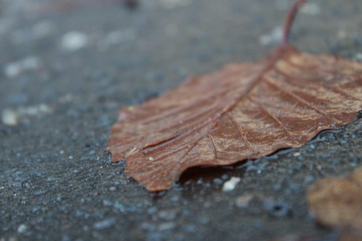 Watery Leaf
